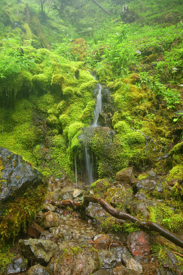 Cachoeira na floresta imagens de stock royalty free