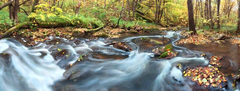 Cachoeira na floresta fotos de stock