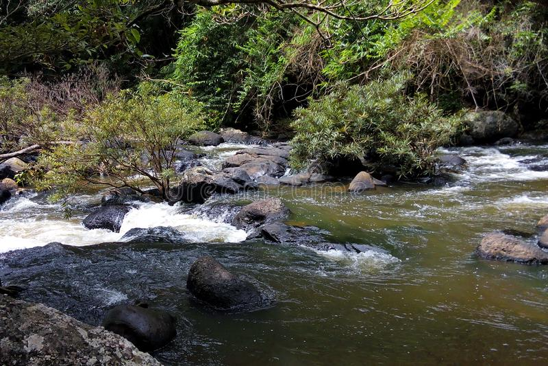 A cachoeira na floresta grande é calma fotos de stock