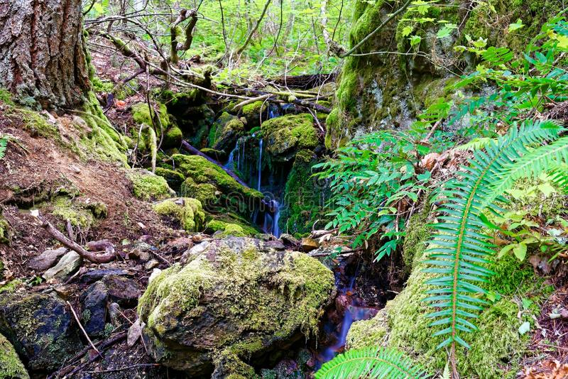 Cachoeira na fuga de Diablo Lake nas cascatas nortes fotografia de stock