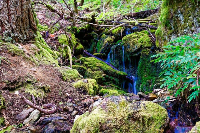 Cachoeira na fuga de Diablo Lake nas cascatas nortes imagem de stock royalty free