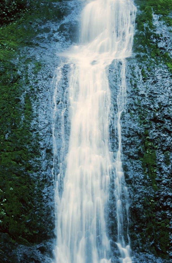A cachoeira na prata cai parque estadual de Oregon foto de stock
