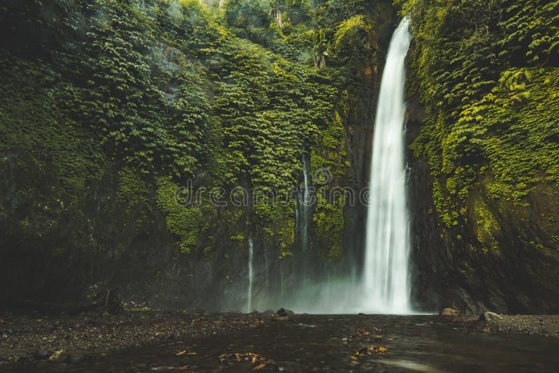 Fundo Vertical Da Natureza Da Cachoeira Tropical Na Selva