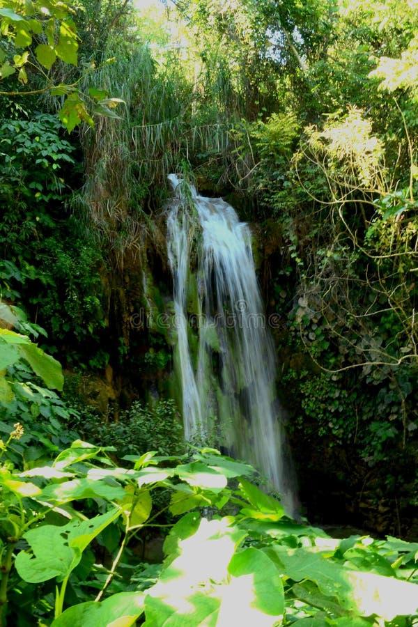 Cachoeira nas cachoeiras tropicais selvagens do EL Nicho da floresta, Cienfuegos, Cuba imagens de stock