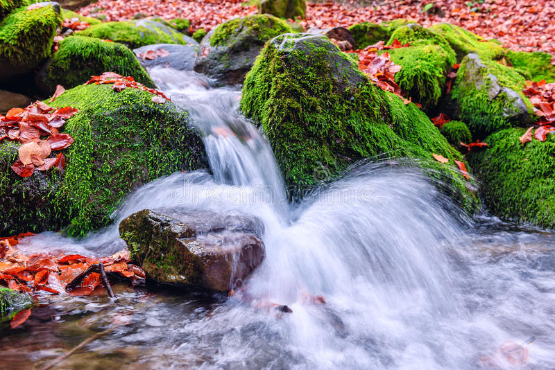 Cachoeira pequena mim a floresta foto de stock royalty free
