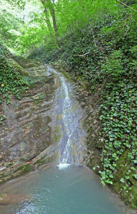 Cachoeira pequena na floresta imagem de stock royalty free