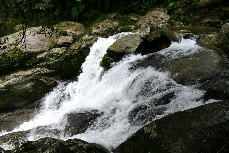 Cachoeira pequena na floresta primitiva de Yakushima, Japão fotografia de stock royalty free