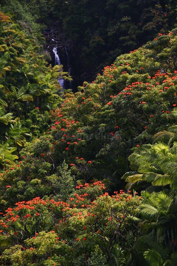 Cachoeira pequena na selva de Havaí imagens de stock royalty free