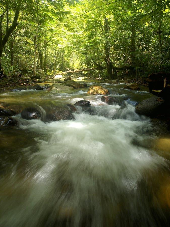 Cachoeira tropical da montanha imagens de stock