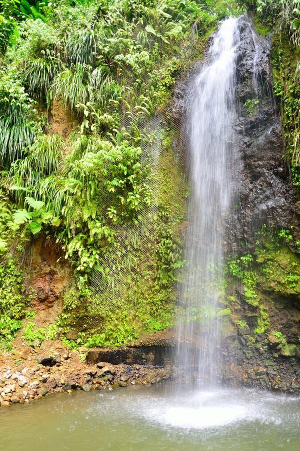 Cachoeira tropical no aspecto do retrato fotografia de stock royalty free