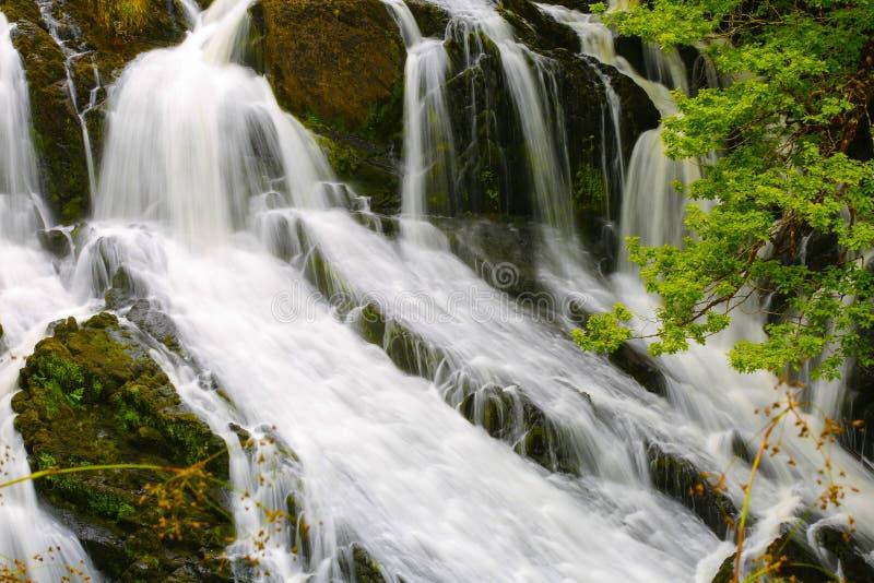 Cachoeiras BRITÂNICAS da andorinha de Gales imagens de stock