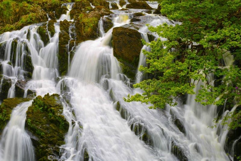 Cachoeiras BRITÂNICAS da andorinha de Gales foto de stock