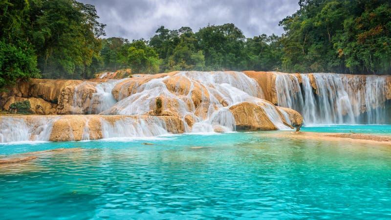 Cachoeiras de Cascadas de Água Azul Água Azul yucatan méxico foto de stock