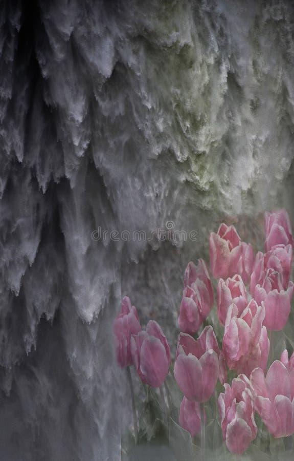 Cachoeiras e Tulips abstratos fotos de stock