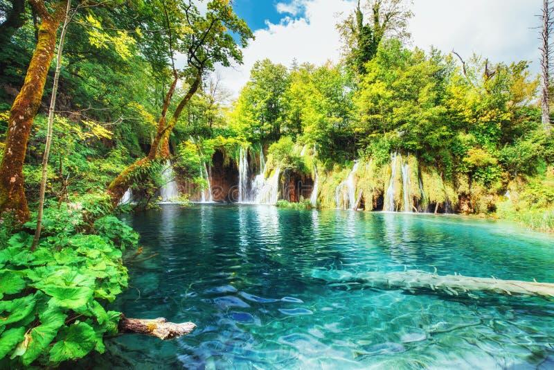 Cachoeiras no parque nacional que cai no lago de turquesa Plitvice, Croatia fotografia de stock royalty free
