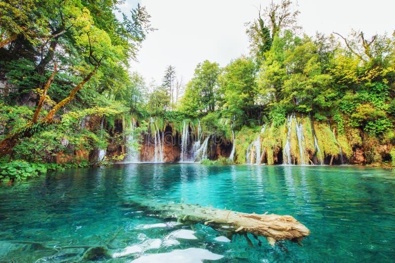 Cachoeiras no parque nacional que cai no lago de turquesa Plitvice, Croatia imagens de stock royalty free