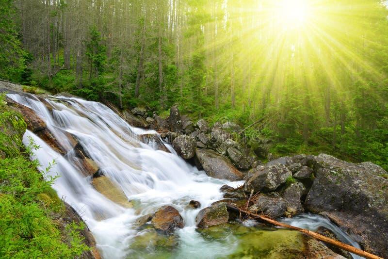 Cachoeiras no potok de Studeny do córrego em Tatras alto fotos de stock royalty free