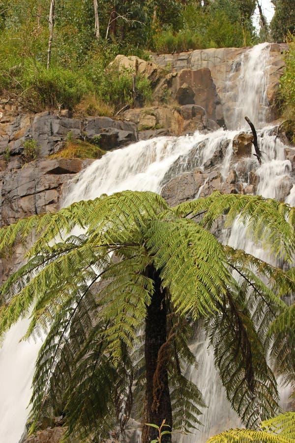 Cachoeiras superiores de Stevenson Falls Marysville Victoria Natural fotografia de stock