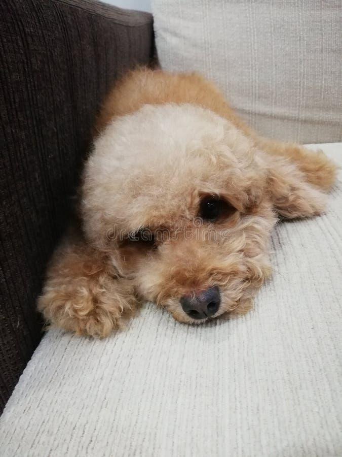 Cachorrinho fotos de stock