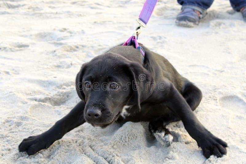 Cachorrinho ansioso fotos de stock