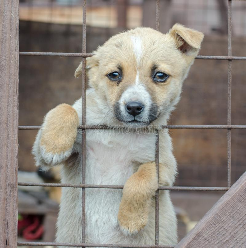Cachorrinho bege do puro-sangue em uma gaiola de madeira imagens de stock royalty free