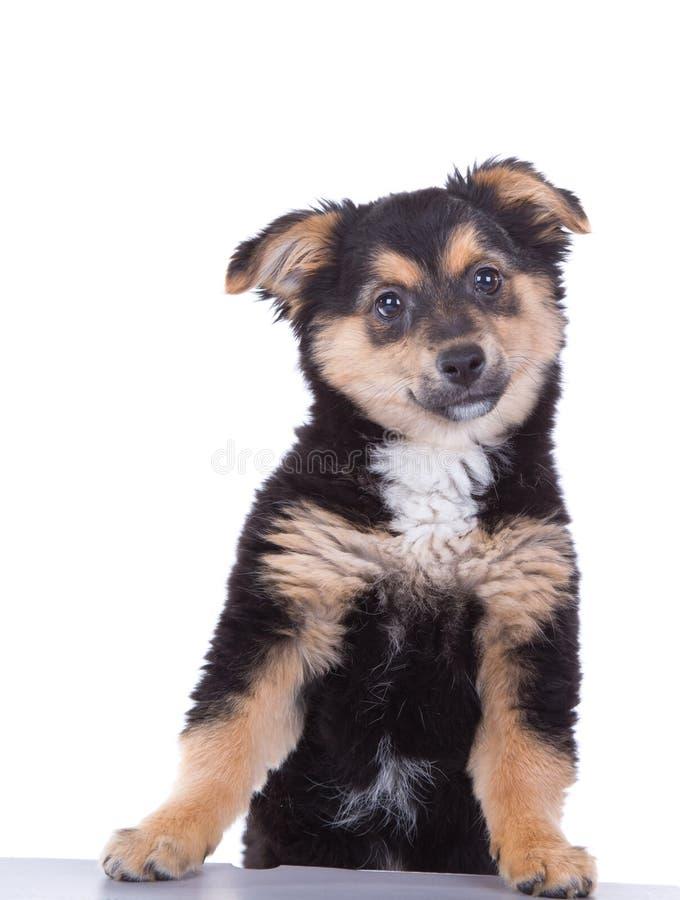 Cachorrinho bonito imagem de stock