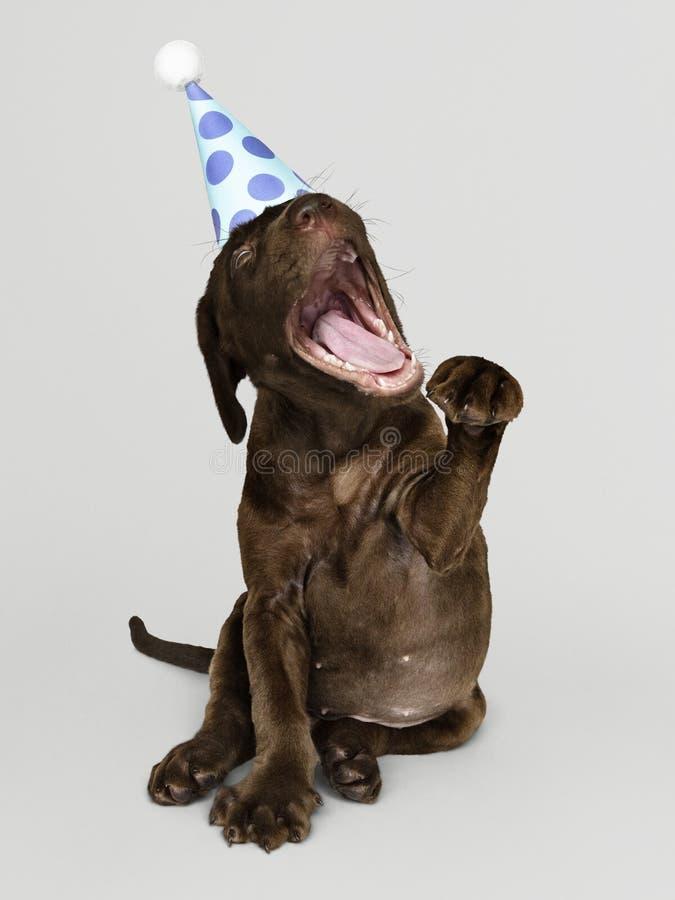 Cachorrinho bonito de labrador retriever com um chapéu do partido foto de stock royalty free