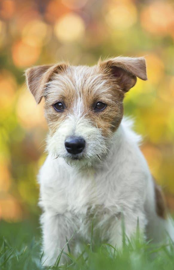 Cachorrinho bonito do cão de estimação com luzes de Natal imagem de stock royalty free
