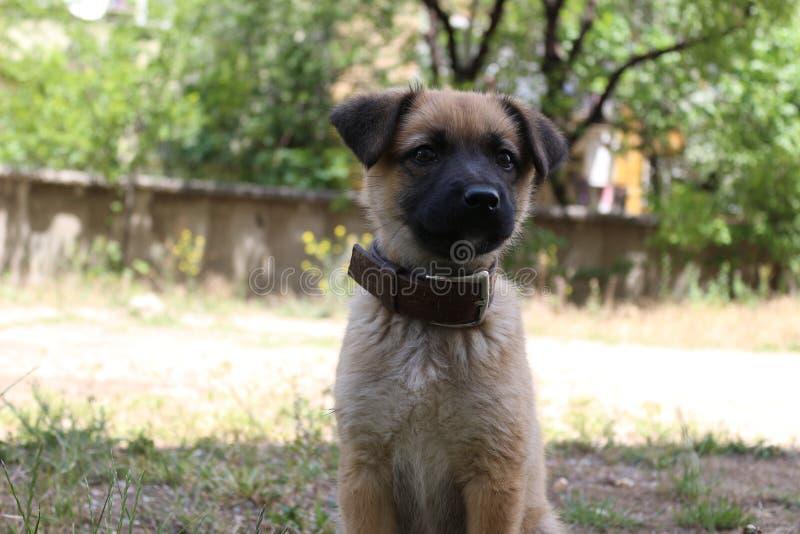 Cachorrinho bonito na jarda imagens de stock