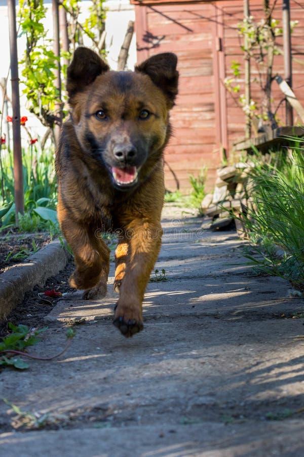 Cachorrinho bonito que corre no jardim Jogo pequeno do cão exterior Amizade e conceito da proteção Retrato animal foto de stock royalty free