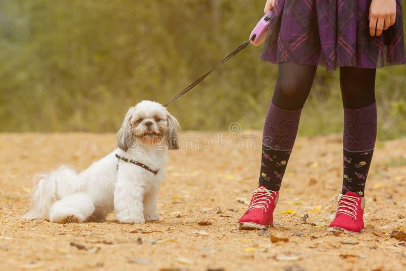 Cachorrinho bonito que senta próximo dos pés seu proprietário pequeno imagens de stock