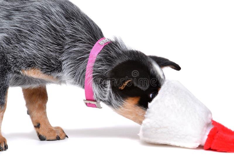 Cachorrinho curioso fotos de stock