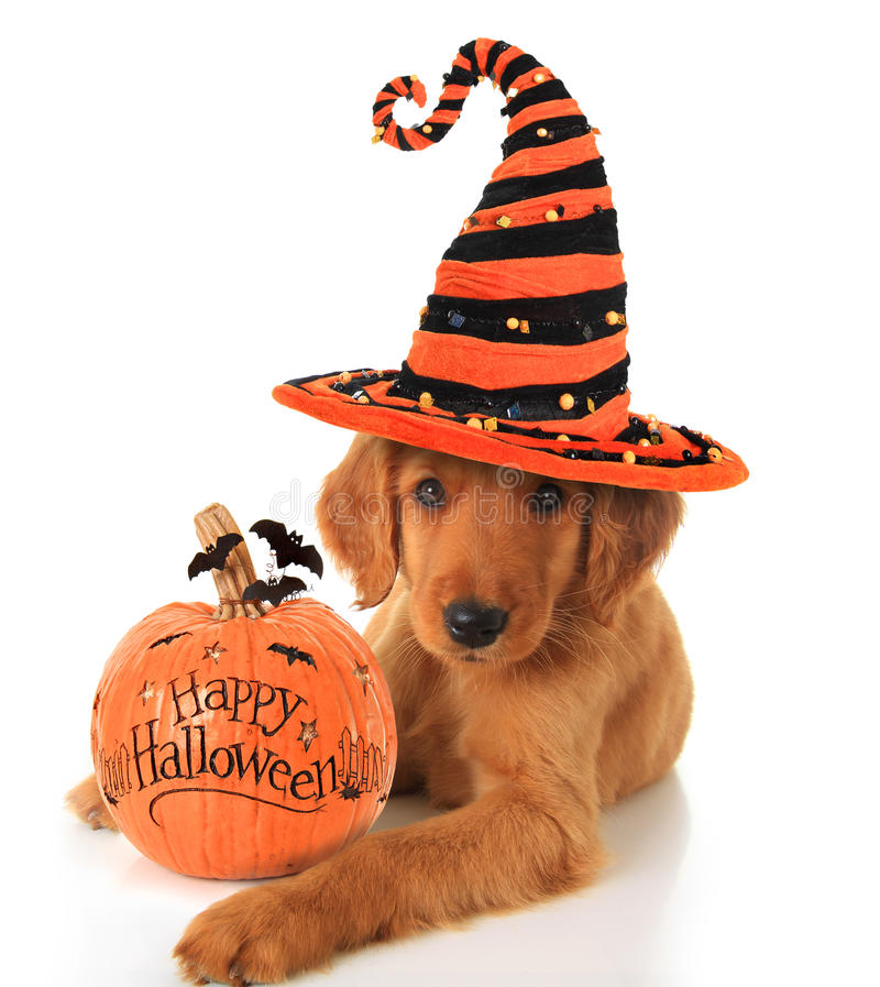 Cachorrinho de Dia das Bruxas imagem de stock