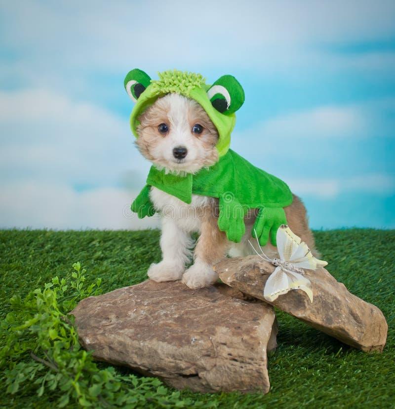 Cachorrinho de Frogger imagens de stock