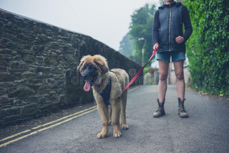 Cachorrinho de passeio de Leonberger da jovem mulher imagens de stock royalty free