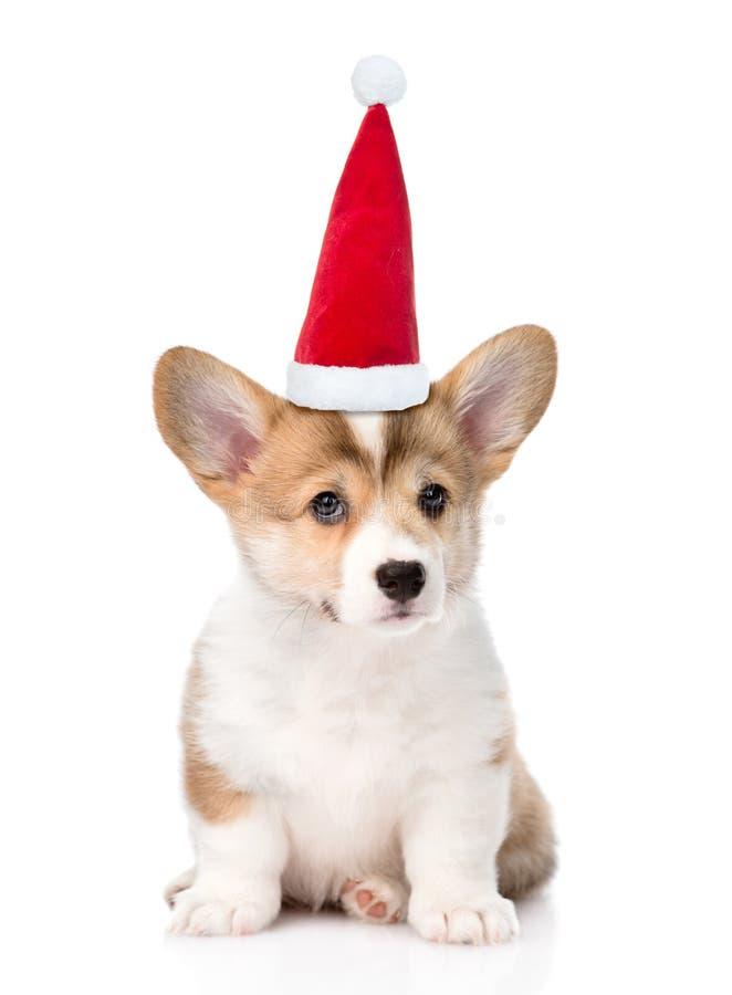 Cachorrinho de Pembroke Welsh Corgi com o chapéu vermelho do Natal que senta-se na parte dianteira Isolado no fundo branco foto de stock