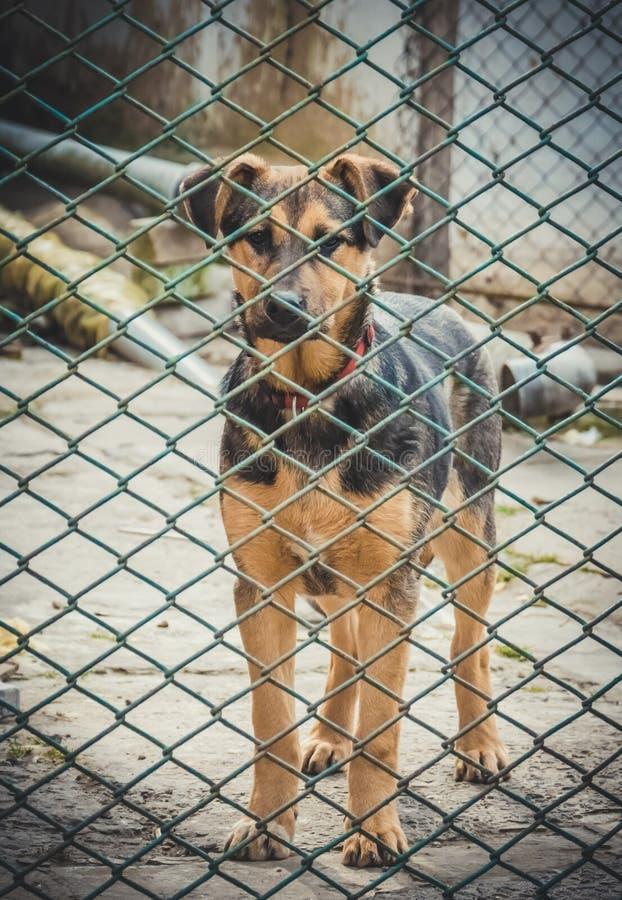 Cachorrinho desabrigado bonito O abrigo para animais abandonados imagem de stock royalty free