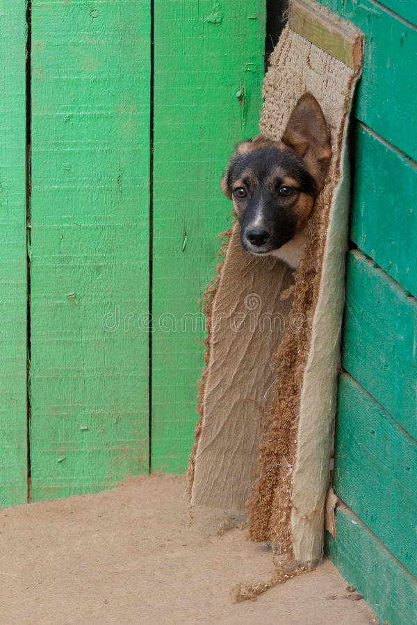 Cachorrinho desabrigado em um abrigo para cães imagens de stock