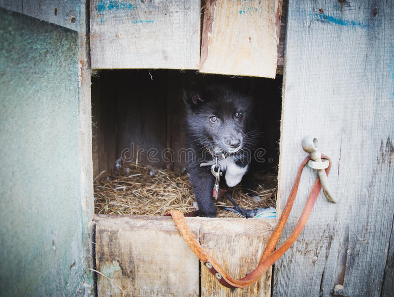 Cachorrinho desabrigado em um abrigo para cães imagem de stock