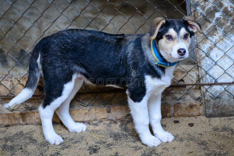 Cachorrinho desabrigado no abrigo foto de stock