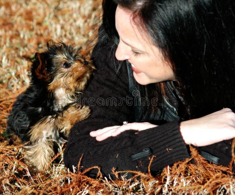 Cachorrinho diminuto de Yorkie fotos de stock