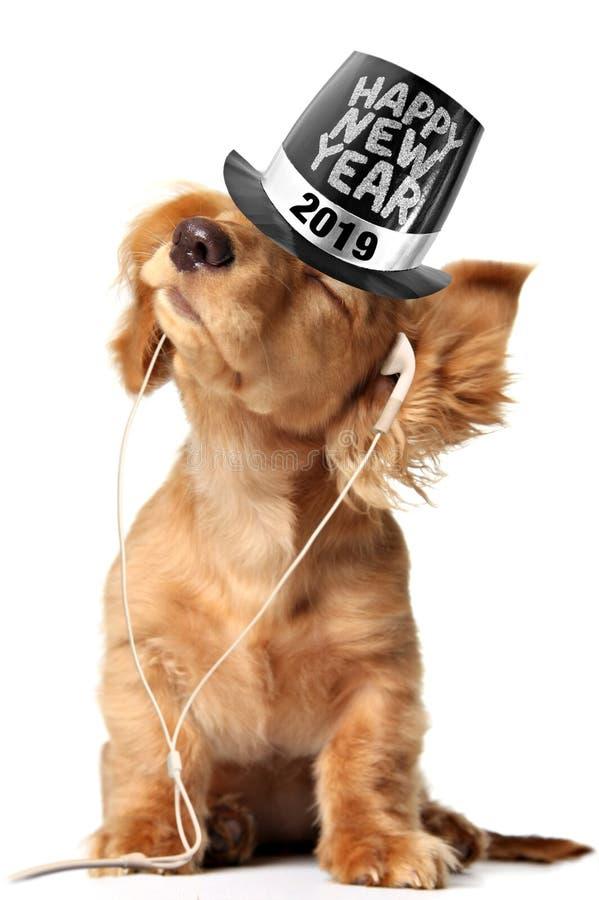 Cachorrinho do bassê que escuta a música em earbuds e que veste um chapéu alto do ano 2019 novo feliz fotos de stock