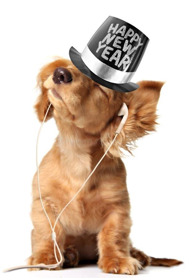 Cachorrinho do bassê que escuta a música em earbuds e que veste um chapéu alto do ano novo feliz foto de stock royalty free