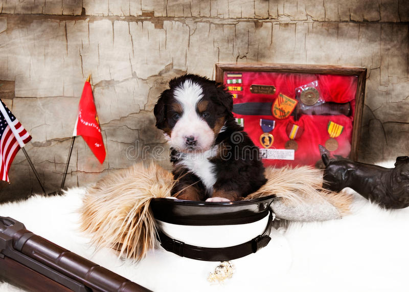 Cachorrinho do dia de veteranos fotografia de stock royalty free