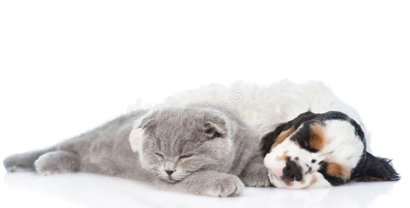 Cachorrinho do gatinho e do cocker spaniel que dorme junto Isolado imagens de stock