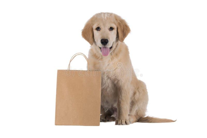 Cachorrinho do golden retriever que senta-se com o saco isolado no branco imagens de stock royalty free
