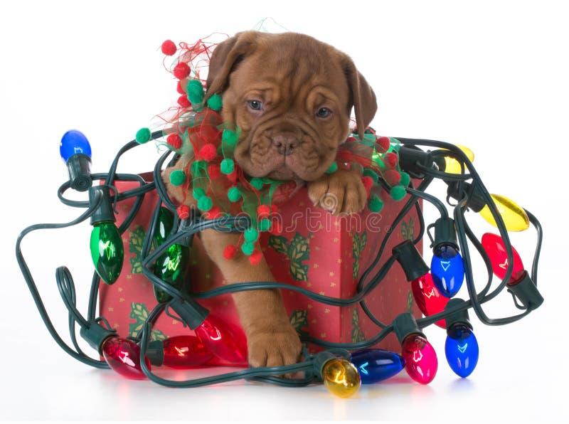 Cachorrinho do Natal imagem de stock royalty free