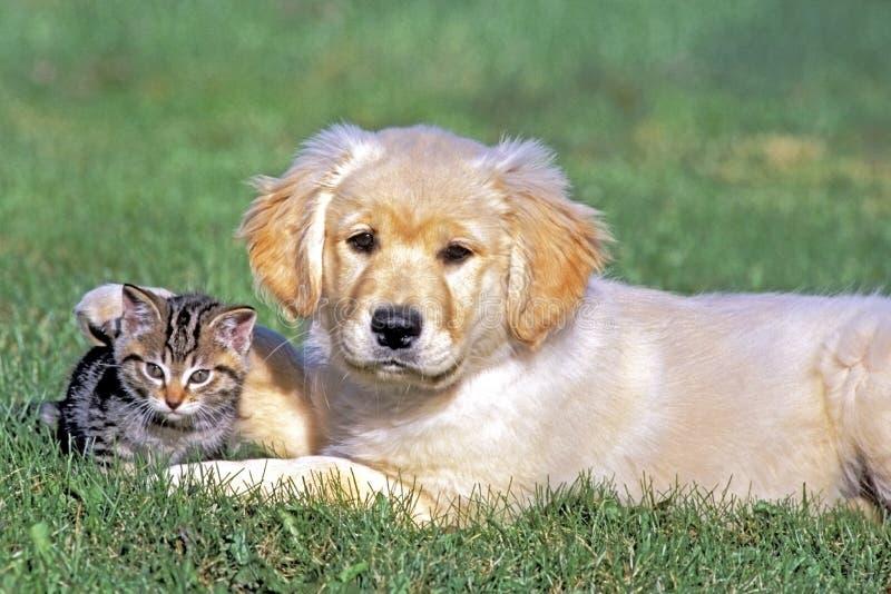 Cachorrinho do perdigueiro e de amigos do gatinho amizade do animal fotografia de stock royalty free