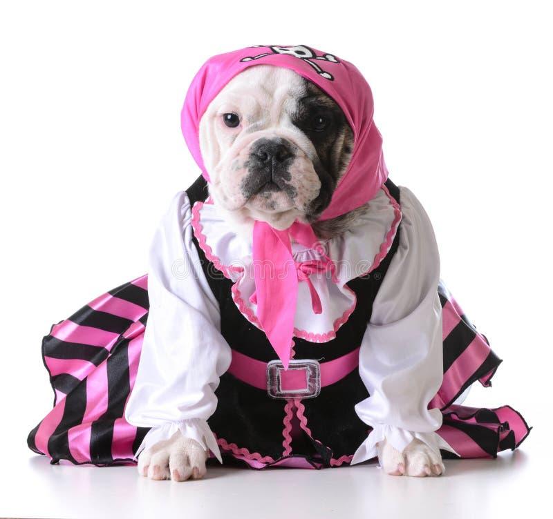 Cachorrinho do pirata imagens de stock