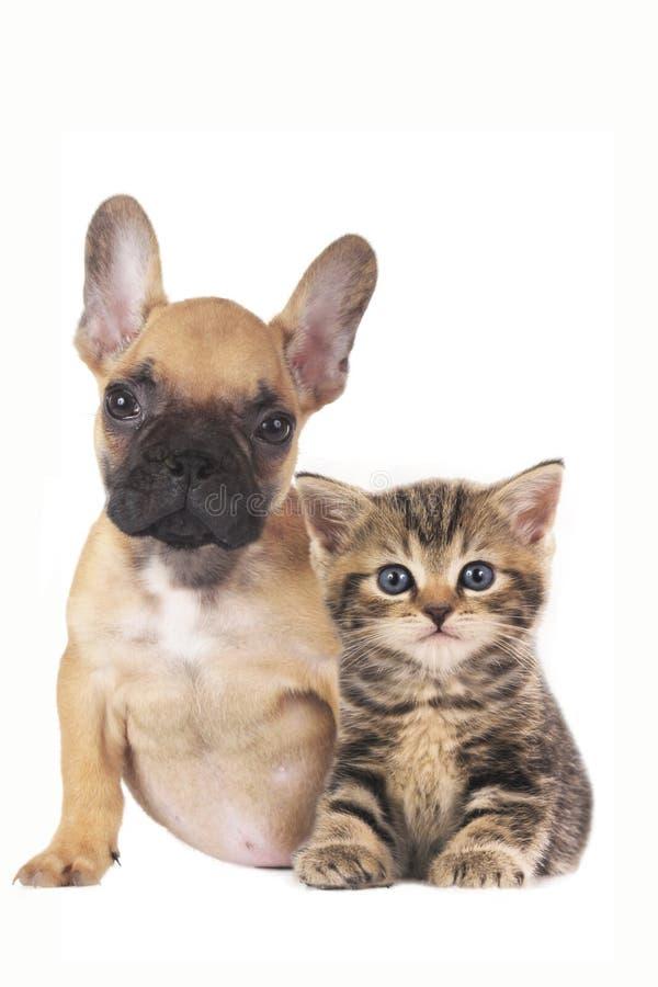 Cachorrinho e gatinho junto no fundo branco imagem de stock royalty free